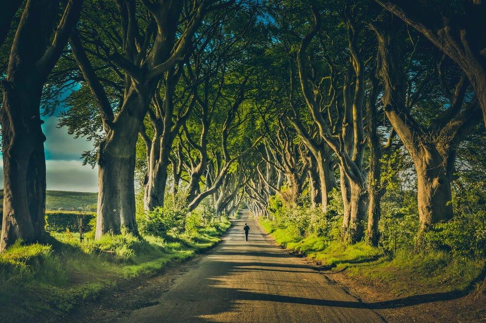 Game of thrones - dark hedges - M-Brain